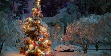 TopTalent Holiday Scheudle